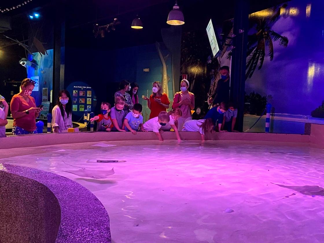 Kindergarten Aquarium visit - SGS